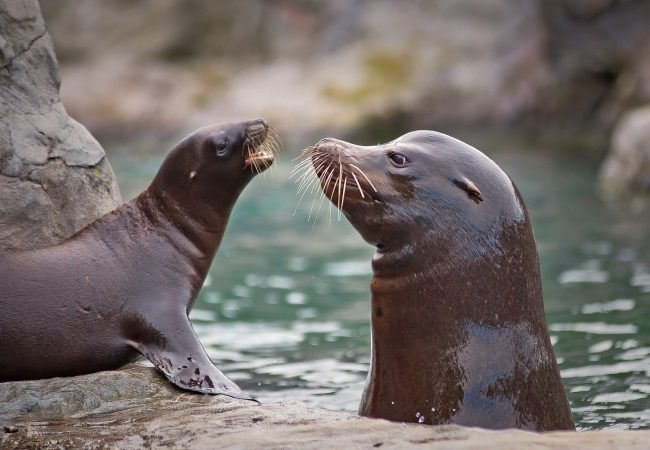Road closure for sea lions in New Zealand